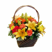 Tropical Sunlight
